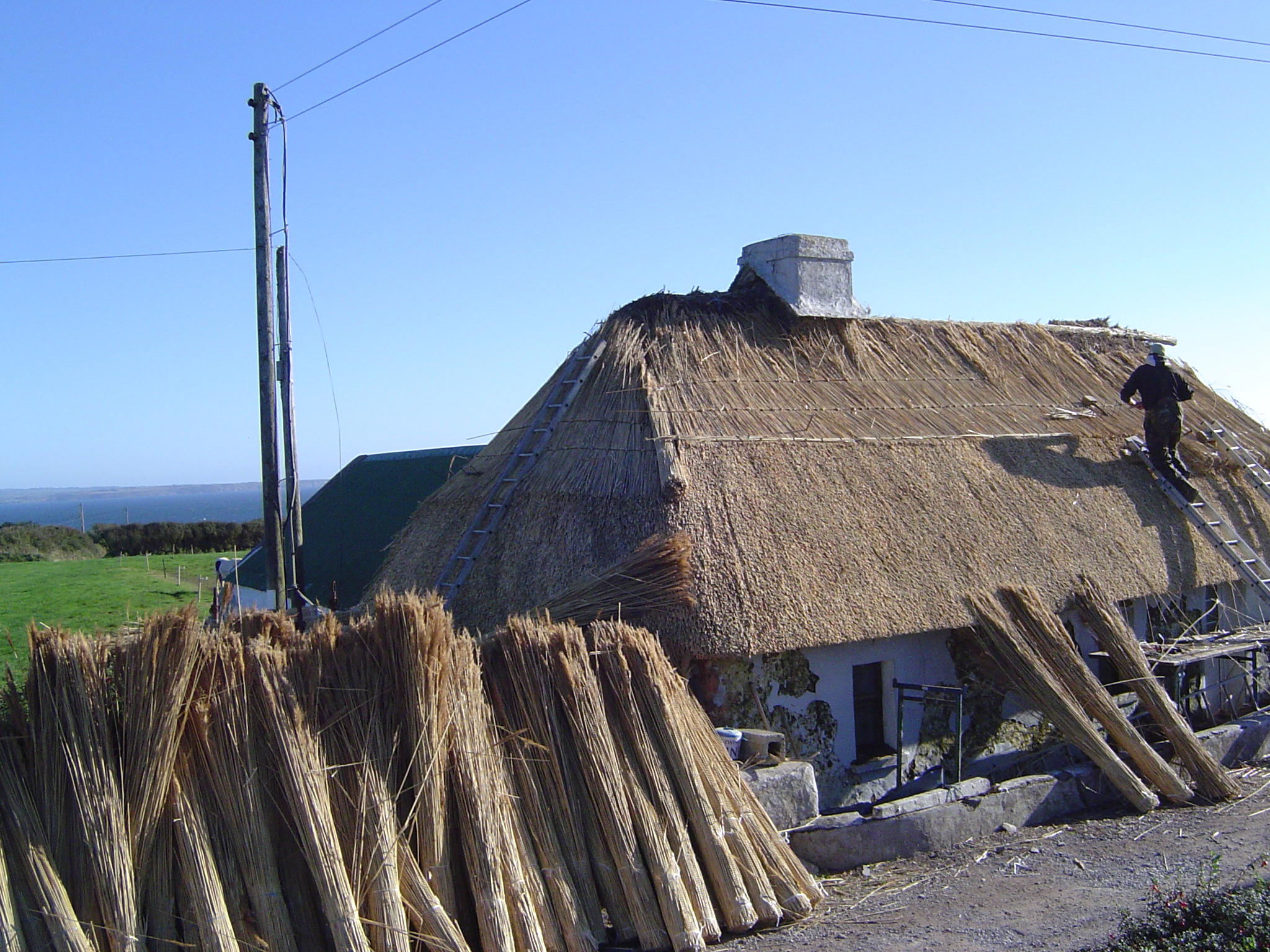 Bundles of reed Knockadoon.jpg